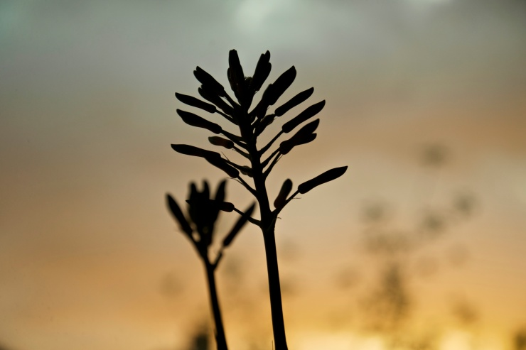 I love the silhouette of this plant.