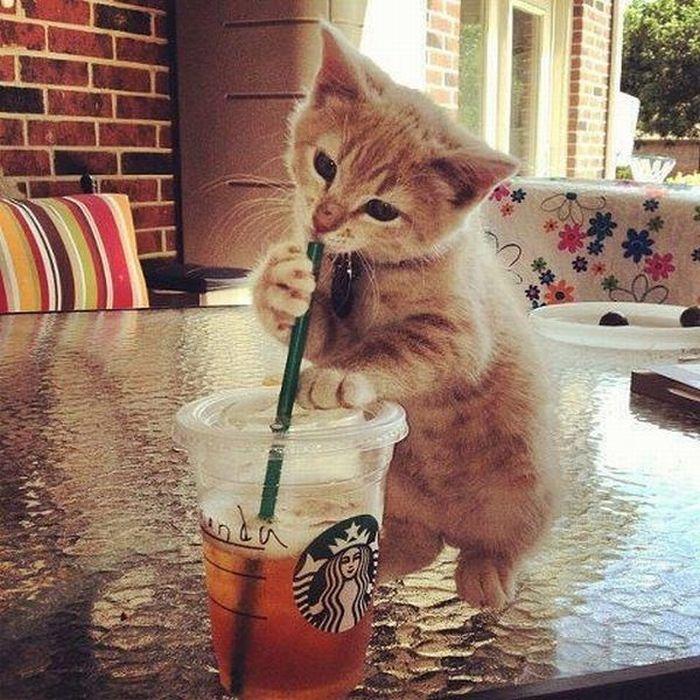 gato-bebendo