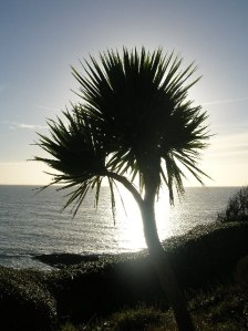 They plant these in Cornwall because the English think it's the same as Spain.
