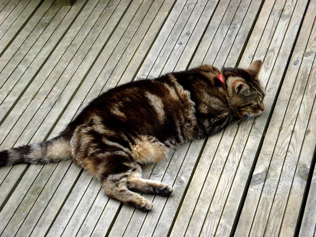 Sleeping putty-tat…