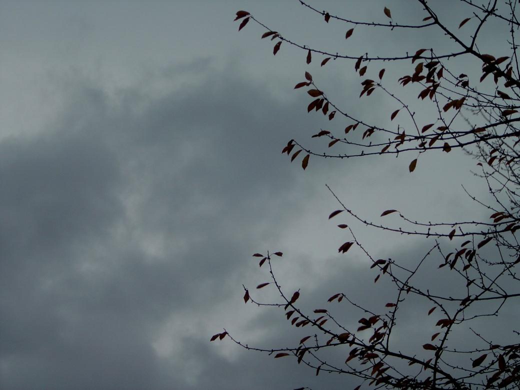The gloom of winter settling in.