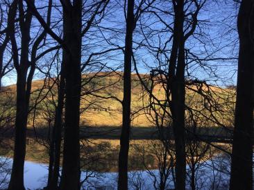 Ladybower Reservoir through trees.