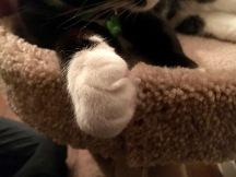 Kitty paw!