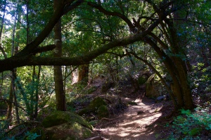 California woods.