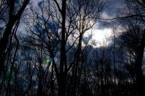 Sun Behind Winter Trees
