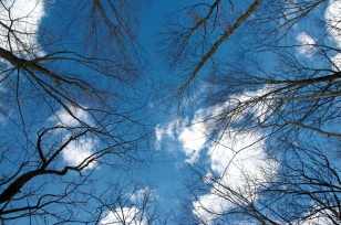 Blue Sky, Black Trees