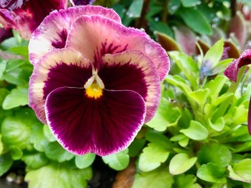 Purple & White Flower